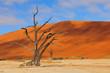 Zdjęcia na płótnie, fototapety, obrazy : Lonely tree skeleton, Deadvlei, Namibia