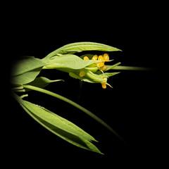 passiebloemvlindereieren