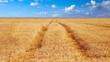 canvas print picture - grainfield