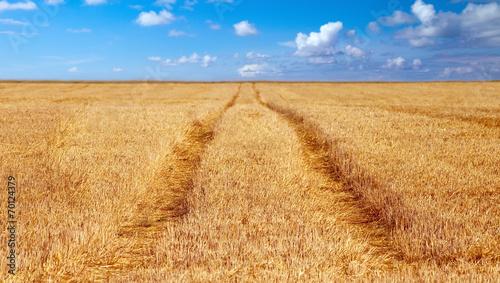 canvas print picture grainfield