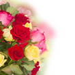 bouquet of fresh multicolored  roses