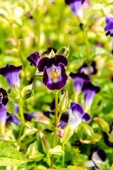 Close-Up of violet colored on flower field background