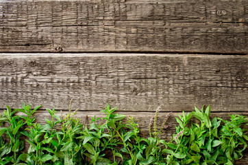 Fresh  mint leaves on old wood background