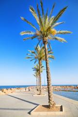 Promenade and beach in Torrevieja, Alicante, Spain.
