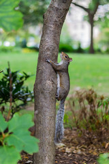 climbing squirrel