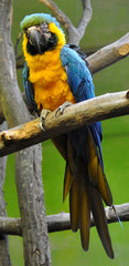 Detailed view of the birds - colorful parrot