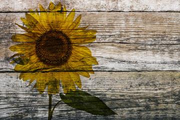 Holzwand mit Sonnenblume © Matthias Buehner