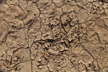 ausgetrockneter Boden © Matthias Buehner