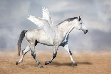 Gray horse pegasus trotting at the desert