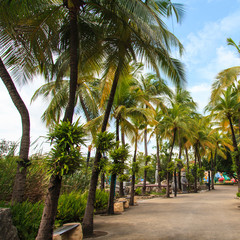 Coconut trees in the park