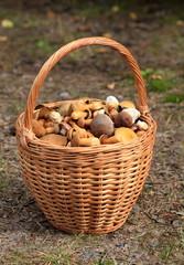 basket full of edible mushrooms