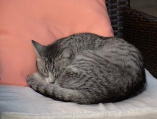 Cute kitty sleeping on a pillow on a chair