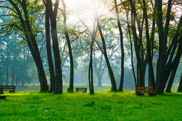 bench in the natural park of the city in the morning