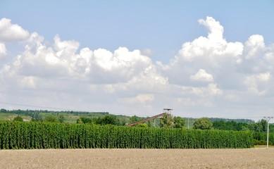 Ernte in der Landwirtschaft