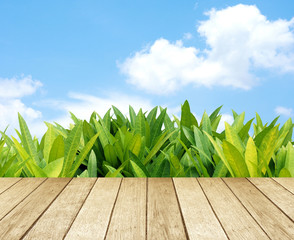 Wood floor with Green leaves and blue sky background