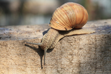Snail on the move.