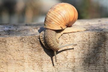 Snail crawling.