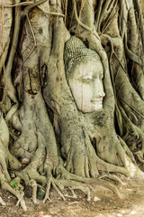 Head in the tree at Ayutthaya,Thailand