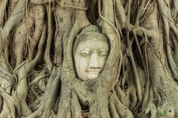 Head in the tree of Unseen Thailand