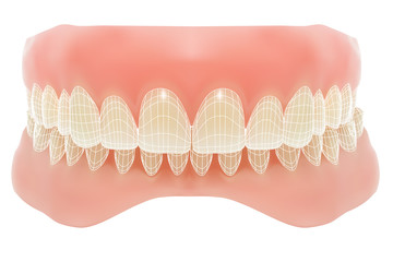 Human jaw. Vector illustration with visible mesh.
