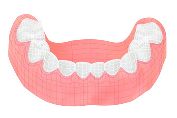 Teeth of the lower jaw. Vector illustration with visible mesh.