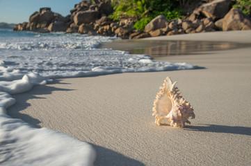 Seashell at beach Anse Georgette, Praslin, Seychelles