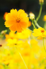 Yellow summer flowers