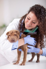 veterinarian hugging  Shar Pei dog
