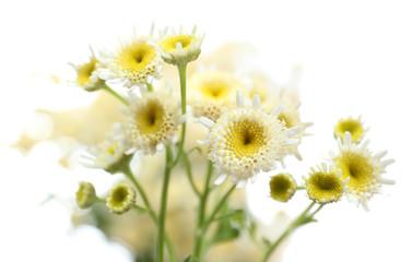 Beautiful wild flowers on light background