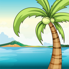 Coconut tree and ocean