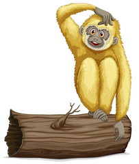 Gibbon on log