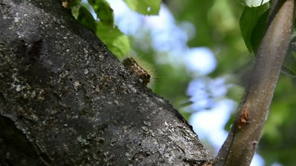 Caterpillar on a tree