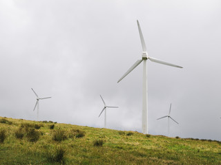 Windmills in nature