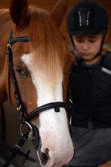 préparation du cheval
