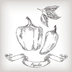 Hand drawn paprika set vector illustration.