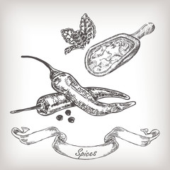 Hand drawn spices with scoop vector illustration.