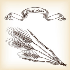 Bakery sketch.Hand drawn illustration of wheat