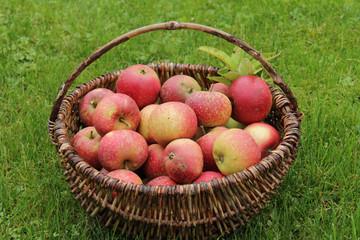 rote Äpfel (Ingrid Marie)
