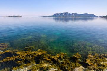Norwegian sea flora