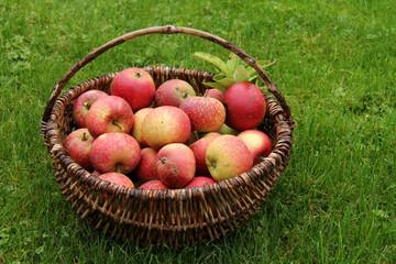 rote Äpfel (Ingrid-Marie)