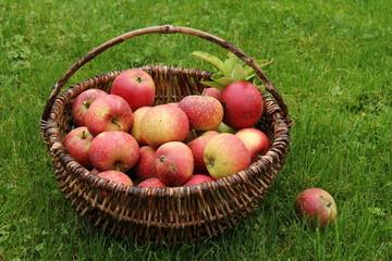 ingrid-marie äpfel