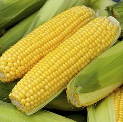 The crops of corn for sale at market