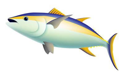 Yellow Fin Tuna Fish
