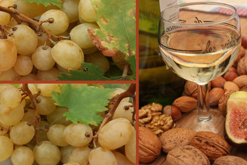 Foire aux Vins -Vin blanc - Vignoble