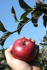Selbstangebautes Obst