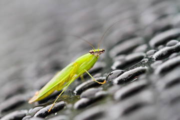 grasshopper facing you on wet grate
