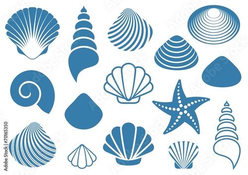 Sea shells - 70165350