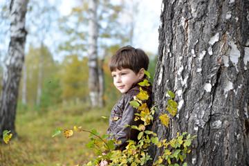little boy at a birch in an autumn forest