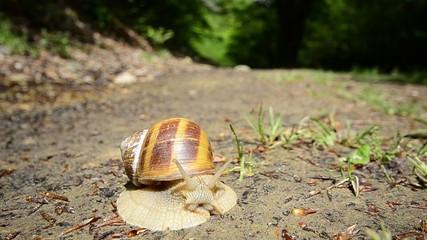 Snail HD, wide angle
