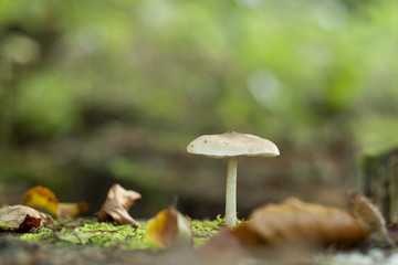 white mushroom growing on an autumn forest, green abstract bohek